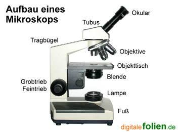 mediendatenbank biologie mikroskopieren. Black Bedroom Furniture Sets. Home Design Ideas
