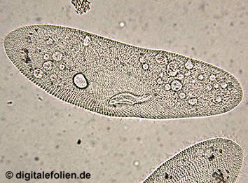 wichtigste regeln beim mikroskopieren schule