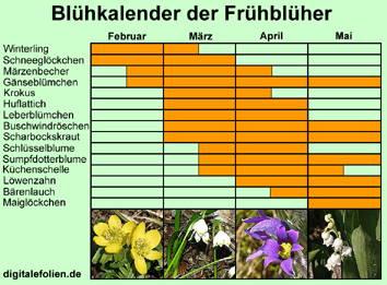 Biologie Der Frühblüher