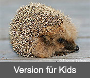 Version für Kids